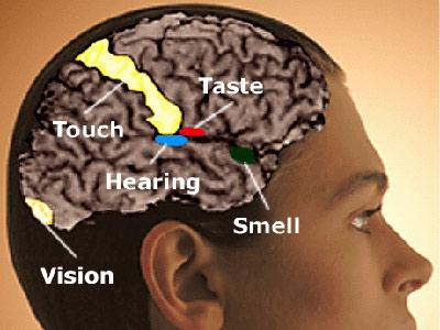 articles-synesthesia-brain.jpg