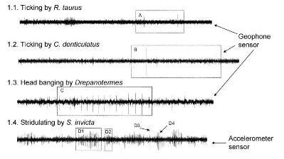 spectrograma.JPG