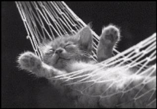 cat_hammock_small.jpg