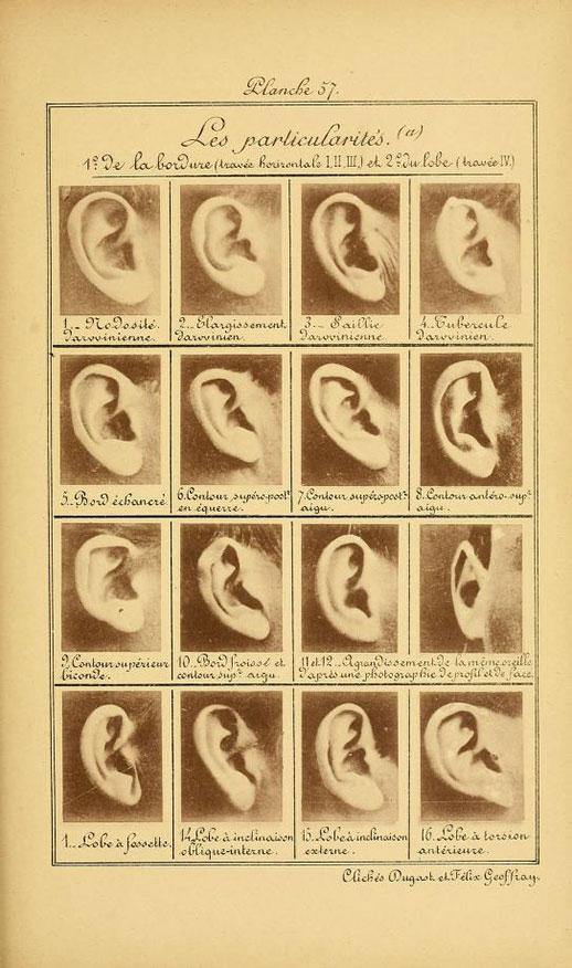 Las particularidades de la oreja